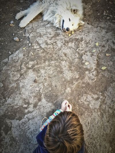 High angle view of boy and dog lying on land
