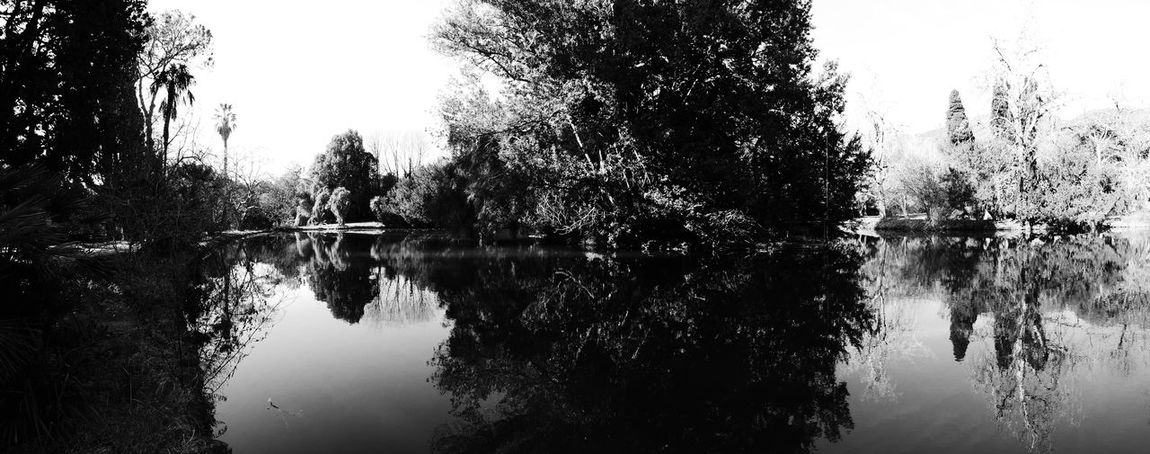 panorama Reflection Water Nature Lake Tree Waterfront Tranquility Outdoors Sky No People Scenics Beauty In Nature Day Bamboo Grove Nature Large Group Of Objects Lumix Lx100 Tree Caserta Reggia Di Caserta Park Travel Destinations Animal Themes