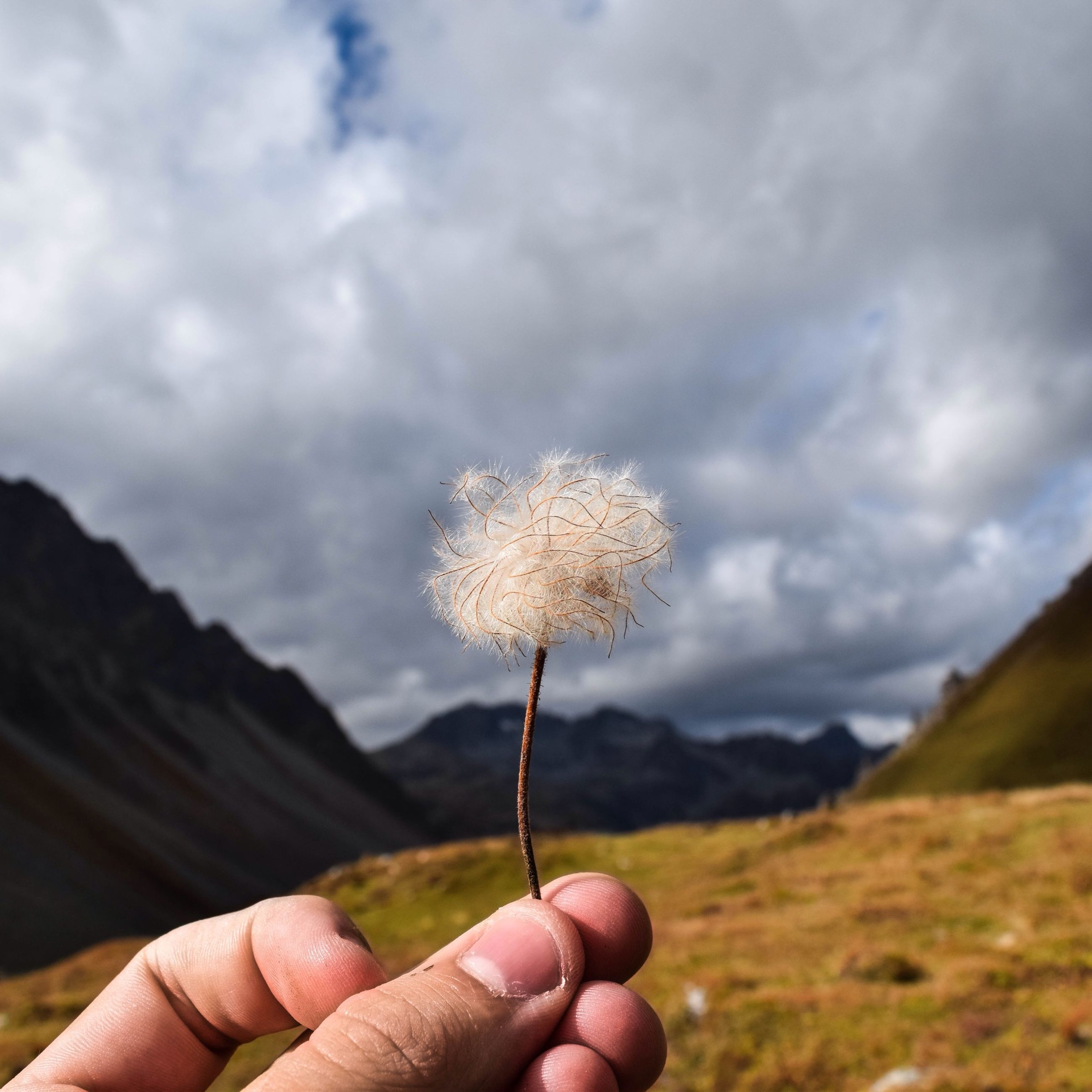 person, holding, part of, human finger, cropped, personal perspective, unrecognizable person, flower, focus on foreground, freshness, sky, fragility, close-up, dandelion, nature, lifestyles, leisure activity