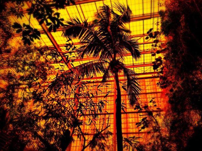 The Illusionist - 2014 EyeEm Awards Palm Trees Aquarium Sun