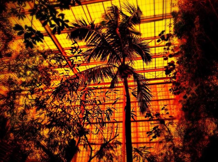 The Illusionist - 2014 EyeEm Awards Palm Trees Aquarium Sun