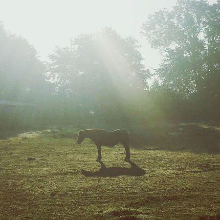Clara Filter Horse Goodmorning :)