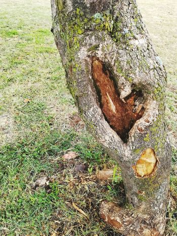 Tree of Love Tree Trunk Heart Shape Green Color Green Nature Grass Farmland Heart Shapes In Nature Outdoors Nature