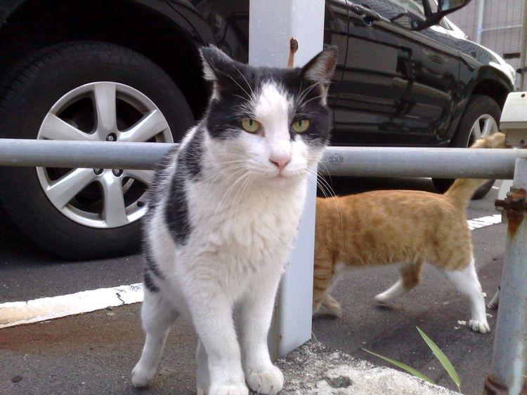 Stray Cat Cat Meow! Animals