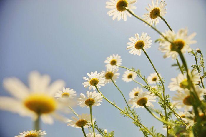 EyeEm Best Shots - Flowers EyeEm Flower Flowerporn EyeEm Nature Lover