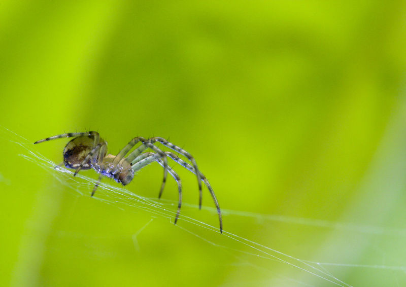 Spider Animal Themes Animals In The Wild Authumn Spider Beauty In Nature Close-up Day Green Color Insect Nature No People One Animal Outdoors Spider Spider Web