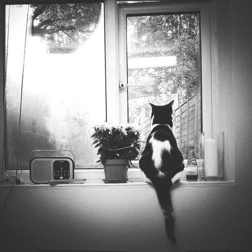 Contemplation. Pets Domestic Animals One Animal Window Rear View Domestic Cat Indoors  Sitting Cat Feline Animal At Home No People Cat Tail Flowers Radio Condiments  View Attention Watching Garden Black And White Monochrome Monochrome Photography