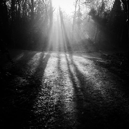 There Might Be Giants Enjoying The Sun Hugging A Tree IPhoneography Blackandwhite Darkness And Light Shadow Nature Trees The Great Outdoors - 2015 EyeEm Awards Creative Light And Shadow