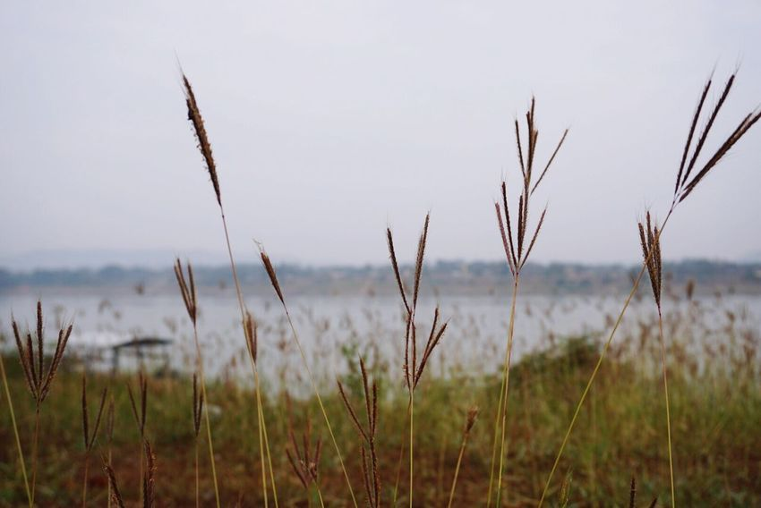 Nature Sea Growth Beauty In Nature Tranquility Tranquil Scene Outdoors No People Sky Plant Scenics Horizon Over Water Grass Tall Grass Water Timothy Grass Close-up Day