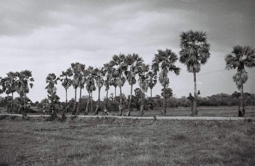 Tall Film Film Photography Filmisnotdead Ishootfilm Ilford Ilford Pan 100 Blackandwhite Monochrome Landscape Nature Olympus Om-10 Analogue Photography