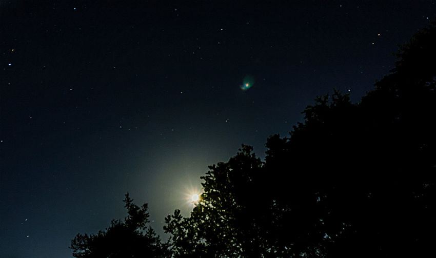 Starry, night, bright, full moon, wilderness, galaxy, skyline, stars, tree, nature, space, astrophotography