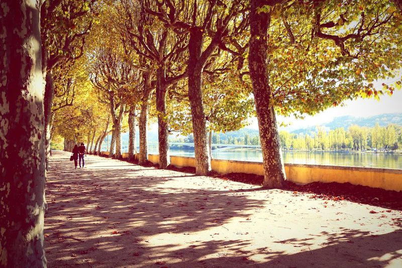 Afternoon Walk