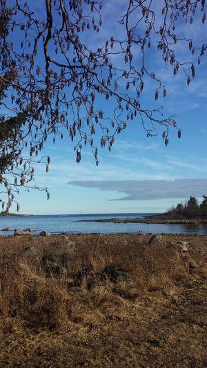 Sea, Spring and Sunset light, Järnäsklubb, Västerbotten, Sweden Sea And Sky Water And Sky EyEm Best Shots - Landscape Nature_collection