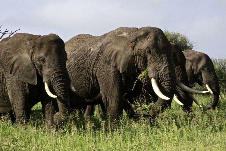 Elephant on grass against sky