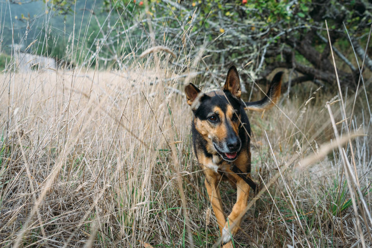 Mendocino County, CA Animal Themes Day Dog Domestic Animals Grass Looking At Camera Mammal Nature No People One Animal Outdoors Pets Portrait