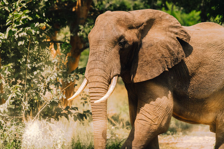 Elephant in forest during sunny day