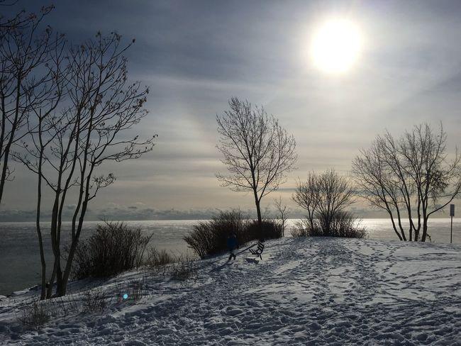 Lake Ontario, Toronto, Ontario, Cold Temperature Outdoors Scenics Sky Snow Sun Sunlight Tranquility Tree