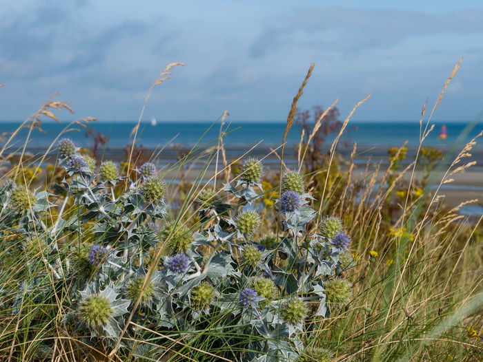 Close-up of plants at beach against sky