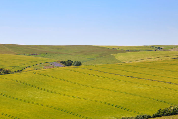 Summer Sussex Landscape Agriculture Beauty In Nature Cereal Plant Clear Sky Day Farm Field Grass Hill Horizon Over Land Landscape Nature No People Outdoors Rolling Landscape Rural Scene Scenics Sky South Downs Summer Sunlight Sussex Tranquil Scene Tree Wheat
