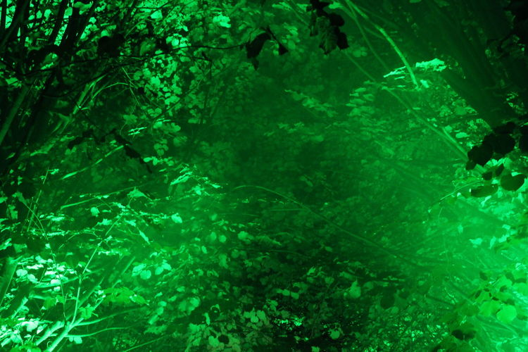 Backgrounds Dark Darkness And Light EyeEm Gallery EyeEm Illuminated EyeEm Nature Lover Full Frame Green Green Color Illuminated Learn & Shoot: After Dark Lichtspiele Light Night Nightphotography Non-urban Scene Outdoors Poesie Des Lichts Schloss Dyck Tranquil Scene Tree TreePorn Vibrant Color