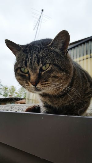 One Animal Domestic Cat Animal Themes Pets Domestic Animals No People Sky Feline Mammal Day Outdoors Close-up Leopard