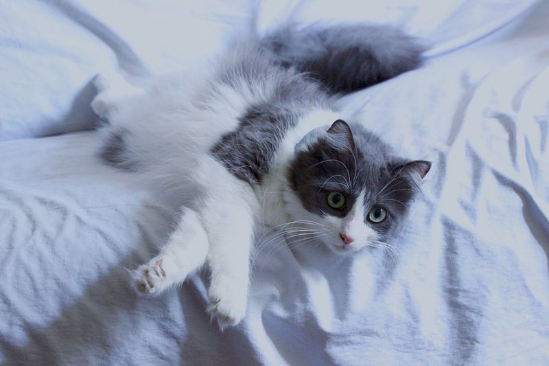 Casually relaxing Relaxing Bliss Funny Cat Domestic Cat Longhairedcat Frankencat Backdrop Feline Couch Canonrebelt3i