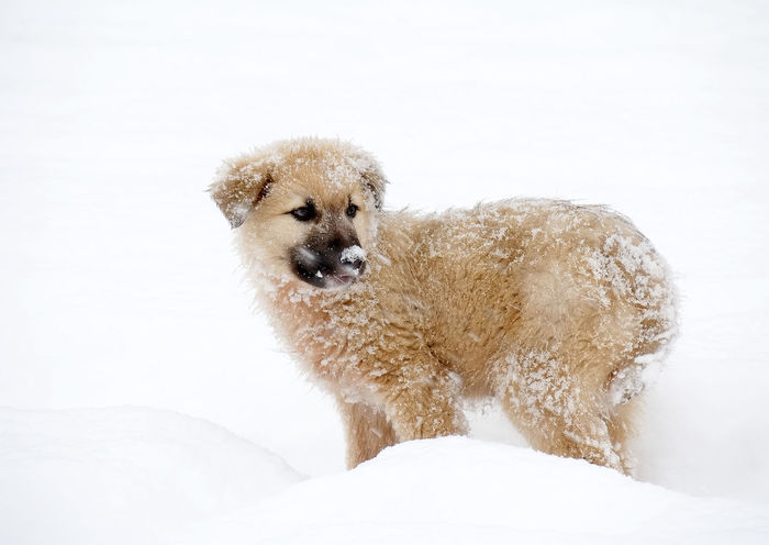 Nikon Adorable Animal Beautiful Cold Cub Cute Dog Lovely Nice Pet Snow Winter