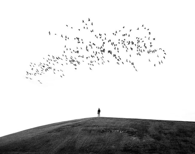 Surrounded⚫ Bird Large Group Of Animals Flock Of Birds Silhouette Full Length Mid-air Shades Of Winter