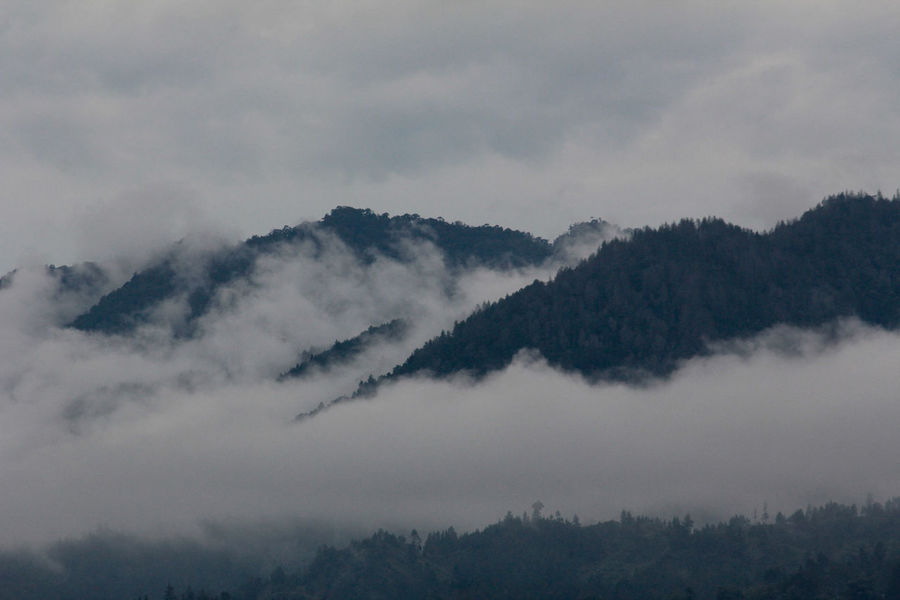 Foggy Mountains INDONESIA Beauty In Nature Day Fog Foggy Low Angle View Nature No People Outdoors Sky Tranquility Tree