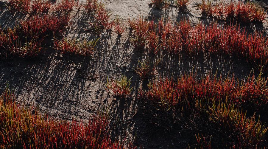 Full frame shot of multi colored trees against sky