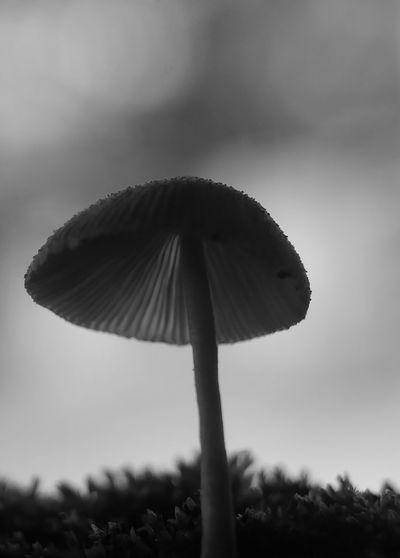 Close-up of mushroom growing on land against sky