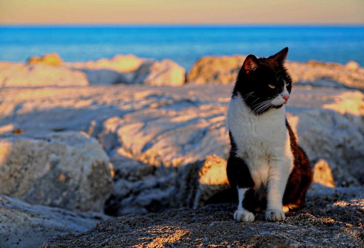 Gatto Cat Pets Domestic Animals Animal Themes Domestic Cat One Animal Mammal No People Outdoors Beach Feline Day Nature Sea Beauty In Nature Sky