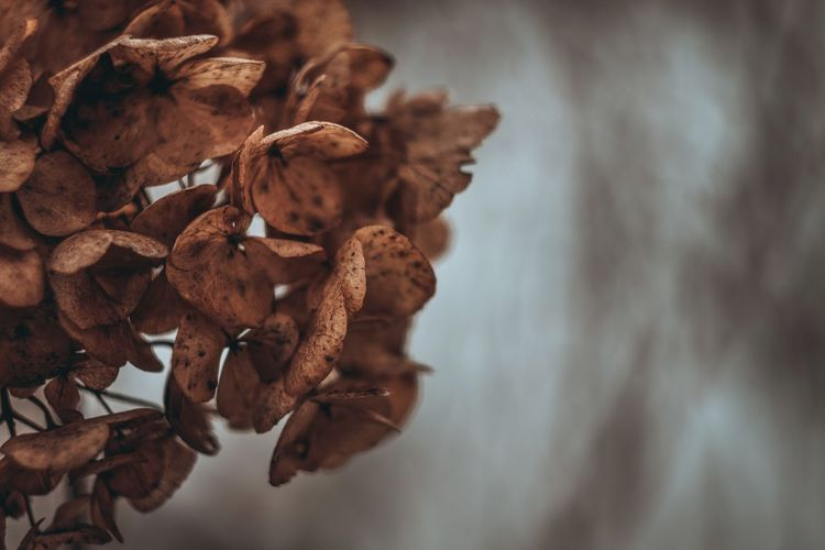 Bokehlicious Bokeh Love Wintertime Exceptional Photographs Silhouette EyeEm Nature Lover Eye4photography  Poland Wilted Plant Close-up Blooming Dried Plant Dead Plant Plant Pod