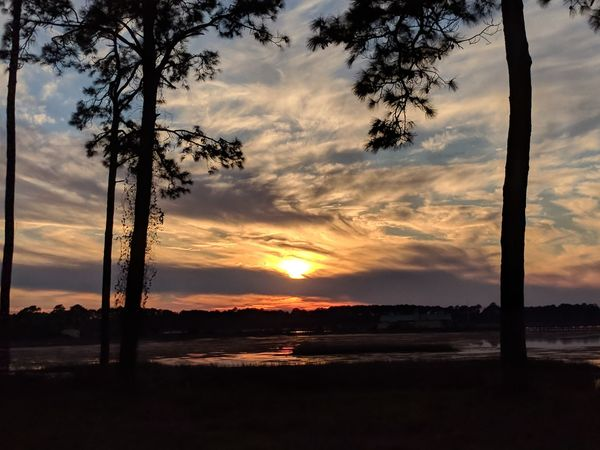 sunset between the trees Sunset Tree Cloud - Sky Landscape Sky