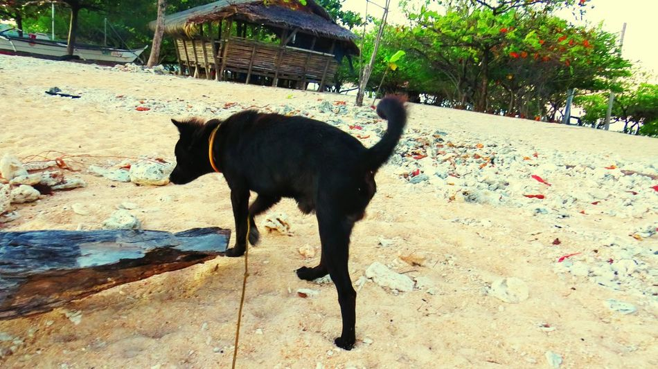 Dog Life In An Island Adventures DECEMBER2015 Global EyeEm Adventure - Philippines Coralstone Travelling Photography this is the only dog in this island. He is extremely affectionate to everyone.. The owner is the caretaker of the island. The island is about a size of more or less 1 hectare.