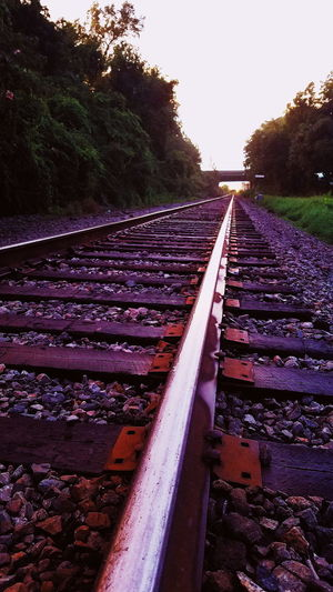 Tree Sky Railroad Tie vanishing point
