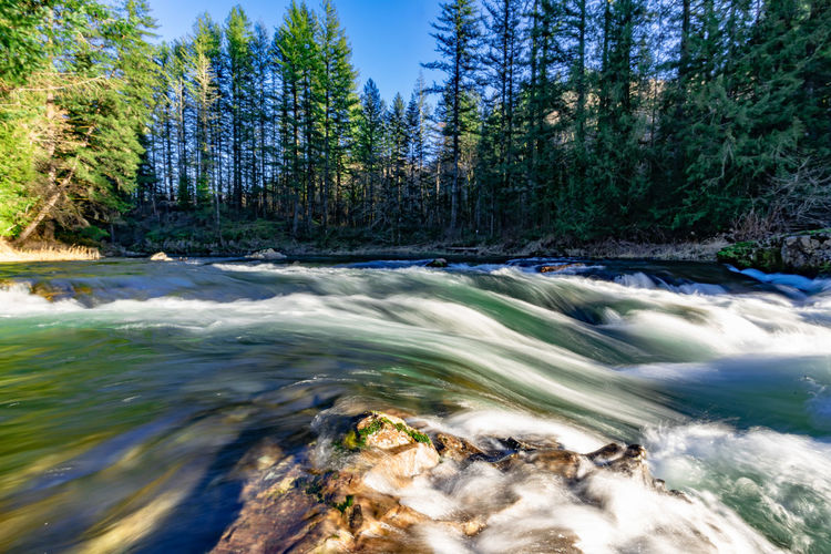 Tree Water Motion Scenics - Nature Forest Plant Nature Beauty In Nature Land Blurred Motion Day No People Flowing Water Long Exposure River Environment Non-urban Scene Power In Nature Sky Outdoors Flowing Stream - Flowing Water Coniferous Tree Pine Tree Purity