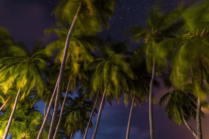 Looking at a sky full of stars under palm trees in beautiful local island Maalhos, Maldives. We stayed in @Madihotels and this shot is taken just outside our room. I have long waited to take such a shot. Palm Tree Tree Nature No People Growth Beauty In Nature Outdoors Low Angle View Tranquility Tranquil Scene Green Color Tree Trunk Sky Blue Scenics Day Milky Way Star - Space Maldives The Great Outdoors - 2017 EyeEm Awards EyeEmNewHere Fresh On Market 2017