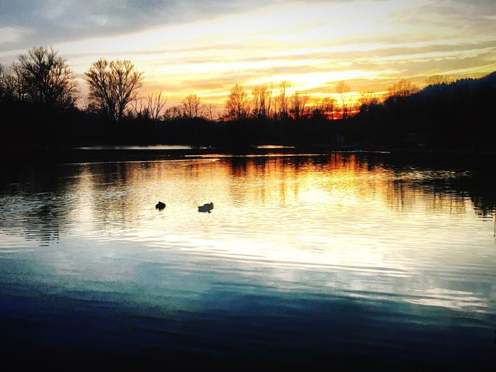 Sunset_collection Nature_collection Animals Ducks Hanging Out Hotncold Blue Water Orange Sky
