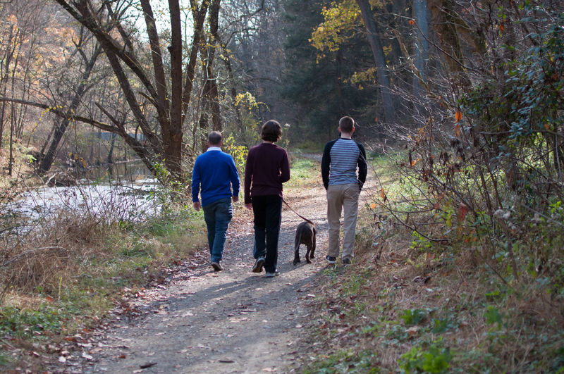 Father and Sons Walking Their Dog Down a Wooded Path Family Relationship Sons Adult Beauty In Nature Bonding Casual Clothing Dog Father Forest Full Length Leisure Activity Lifestyles Nature Outdoors People Pet Real People Rear View Togetherness Walking