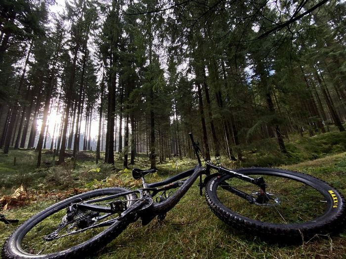 Bicycle parked by trees in forest