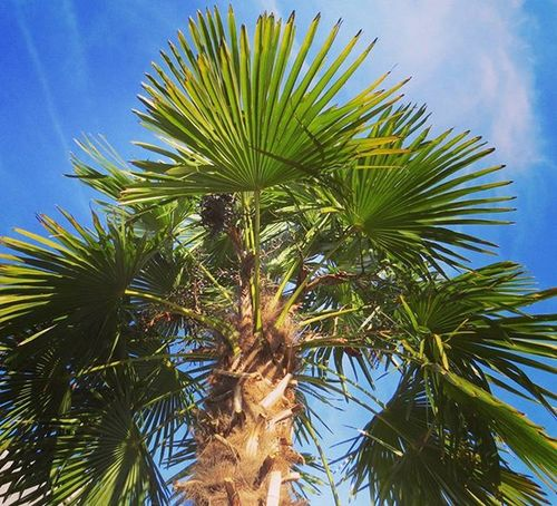 Palm Palme Nature Naturerlebnis Chillout Nature_perfection Natgeo Natgeotravel Natgeotravelpic Lonelytree Sunset_vision Tree_magic Tree_captures Jrlove_tree Blueheaven Littleparadies