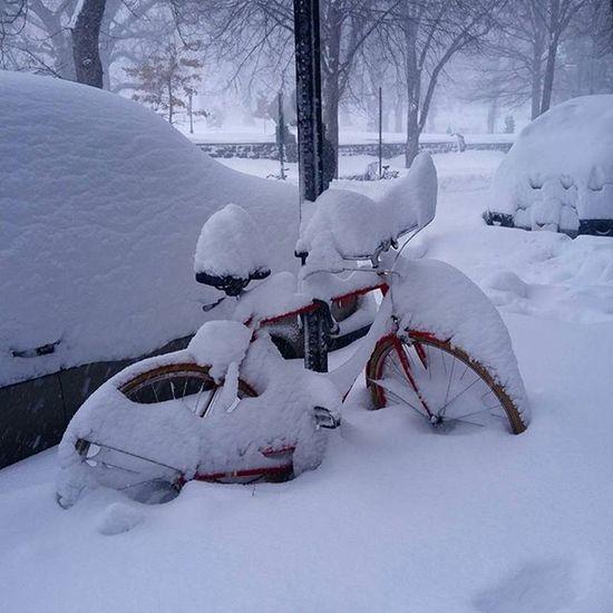 SnowCycle Blizzard style Brooklyn NYC Snowday Havingfun