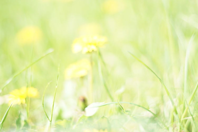 Natural Backgrounds are beautiful. Green Yellow Spring Summer Colorful Beautiful Copyspace Advertisement Blurred Motion Blurred Blurred Background Backgrounds Background Background Texture Wildlife & Nature Springtime Blossoms Colors Beauty In Nature spring into spring Spring Has Arrived Sun Beauty Fluffy Flower Head Flower Springtime Defocused Summer Yellow Uncultivated
