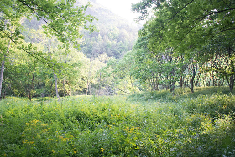 Growth Green Color Nanxi River,Zhejiang Nature Outdoors Forest