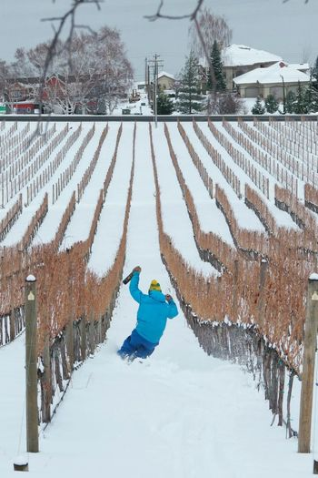 Vineyard Skiing. Wine Wine Bottle Winery Vineyard Drinking Party Recreational Pursuit Masculinity Vineyards In Winter Wine Tasting Apres Ski Après Vineyards  Skiing Skier Rows Rows Of Things Humor Man Manly  Masculine Wine Tasting Wine Tasting Party Wine Glass Snow Cold Temperature Winter Full Length Tree Sky