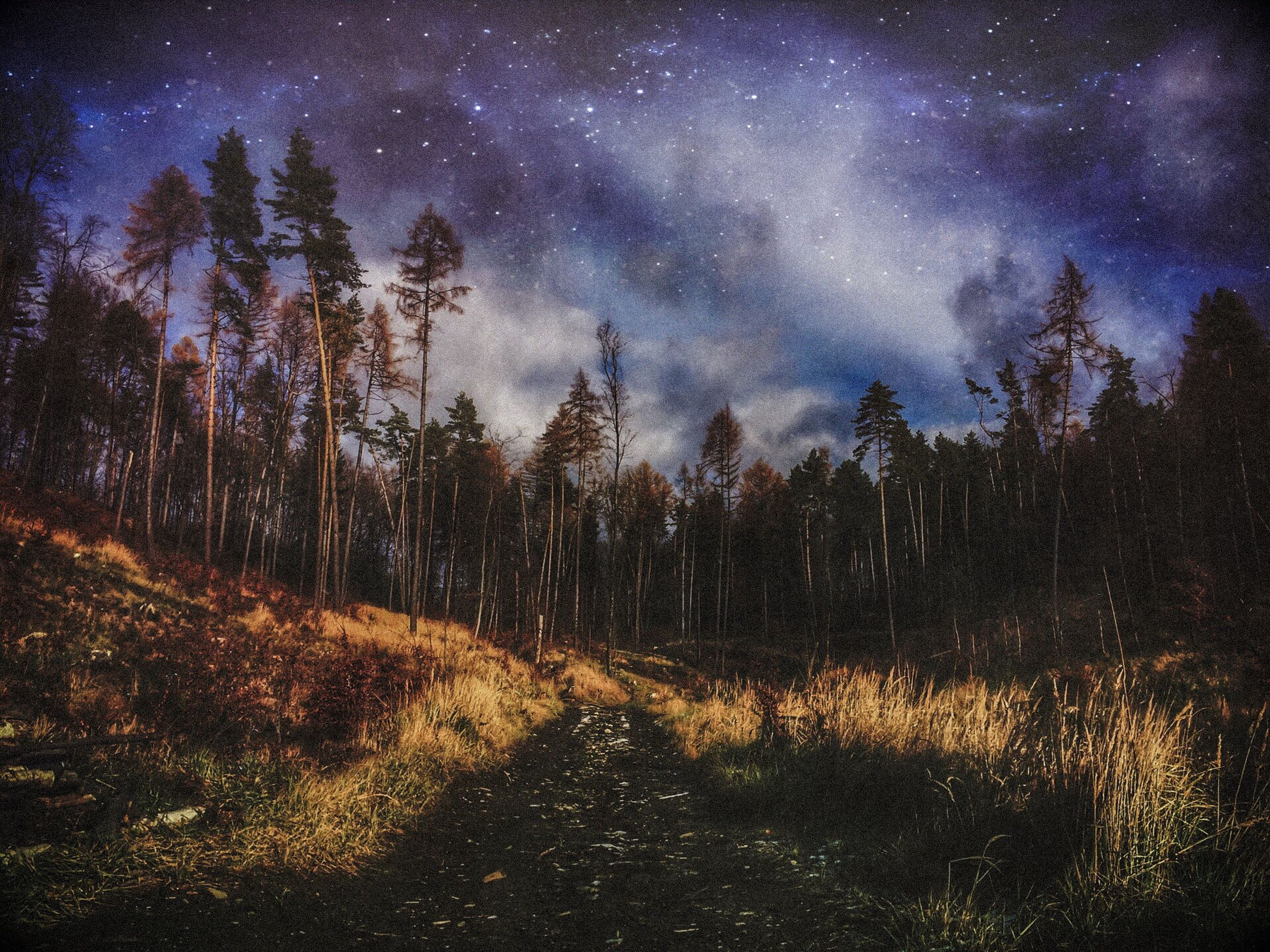 star - space, sky, astronomy, space, nature, tree, night, milky way, beauty in nature, constellation, galaxy, tranquility, scenics, no people, landscape, tranquil scene, star field, star trail, outdoors, aurora polaris