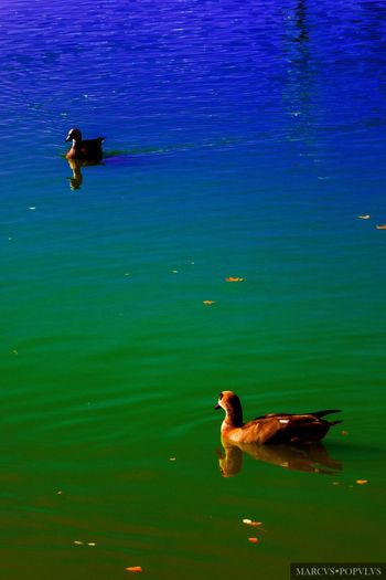 Animal Animals In The Wild Day Floating On Water Nature No People Swimming Water
