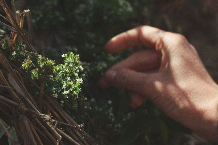 Beauty In Nature Ease Easiness Flower Flower And Hand Flowers Fragility Grace Growth Hand Hand And Flower Hand And Sun Heat Herb Human Body Part Human Finger Human Hand Lightness Modesty  Nature Simplicity Sunlight Sunshine Vintage VSCO The Week On EyeEm
