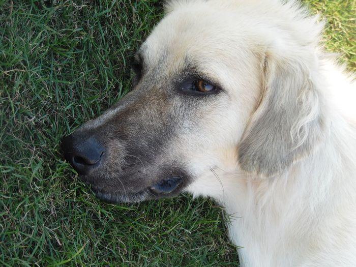 Dog❤ Cute♡ Cute Dog  Sevimlisey😍 Köpek💜💞 Cute Pets Alsancak Izmir Kordon